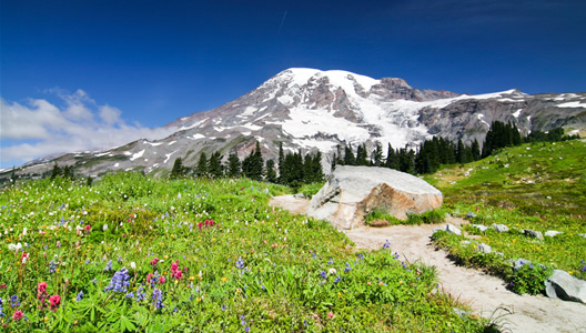 Photo of MOUNT RAINIER NATIONAL PARK courtesy of Michael Eklund